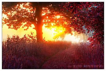 path of glory by werol