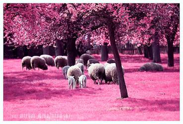 Sheep by werol