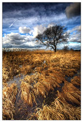 Beneath The Tree by werol