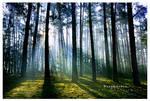 Dreamdance by werol