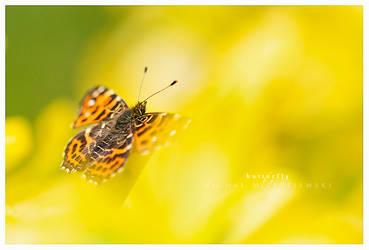 my butterfly by werol