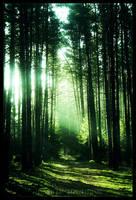 mystic road by werol