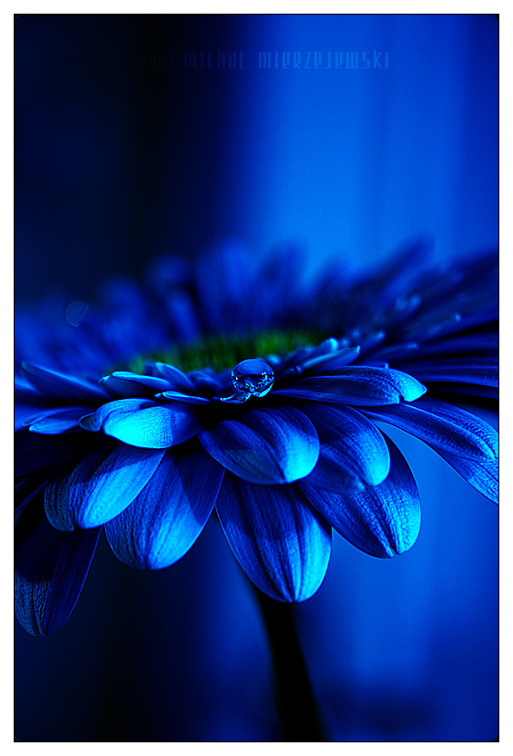 blue by werol