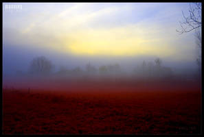 morning by werol