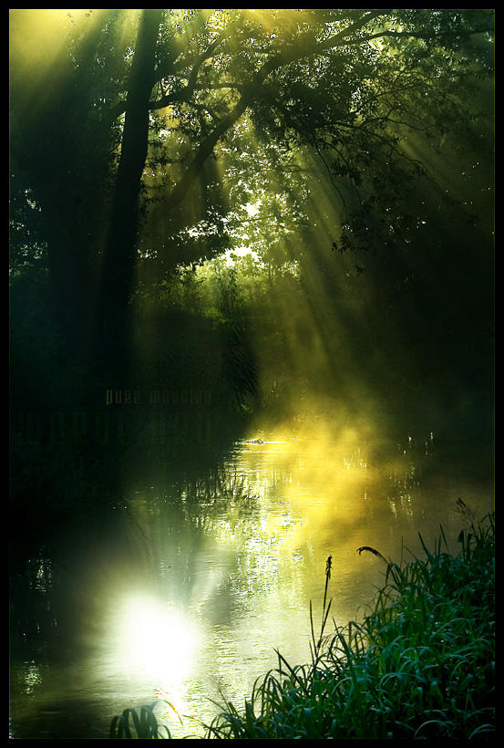 pure morning by werol