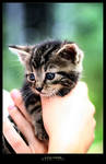 so little one by werol