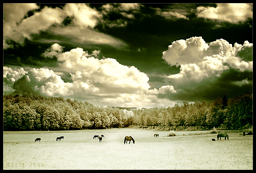 infrared pasture by werol