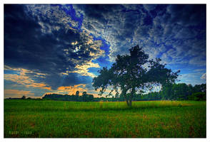 tree... just like innocence by werol