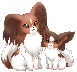 MY PAPILLONS!!