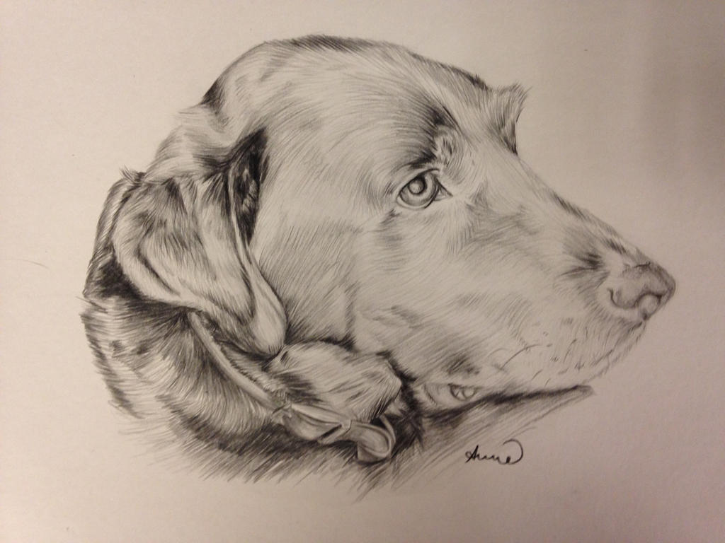 Labrador Commission by Larka18