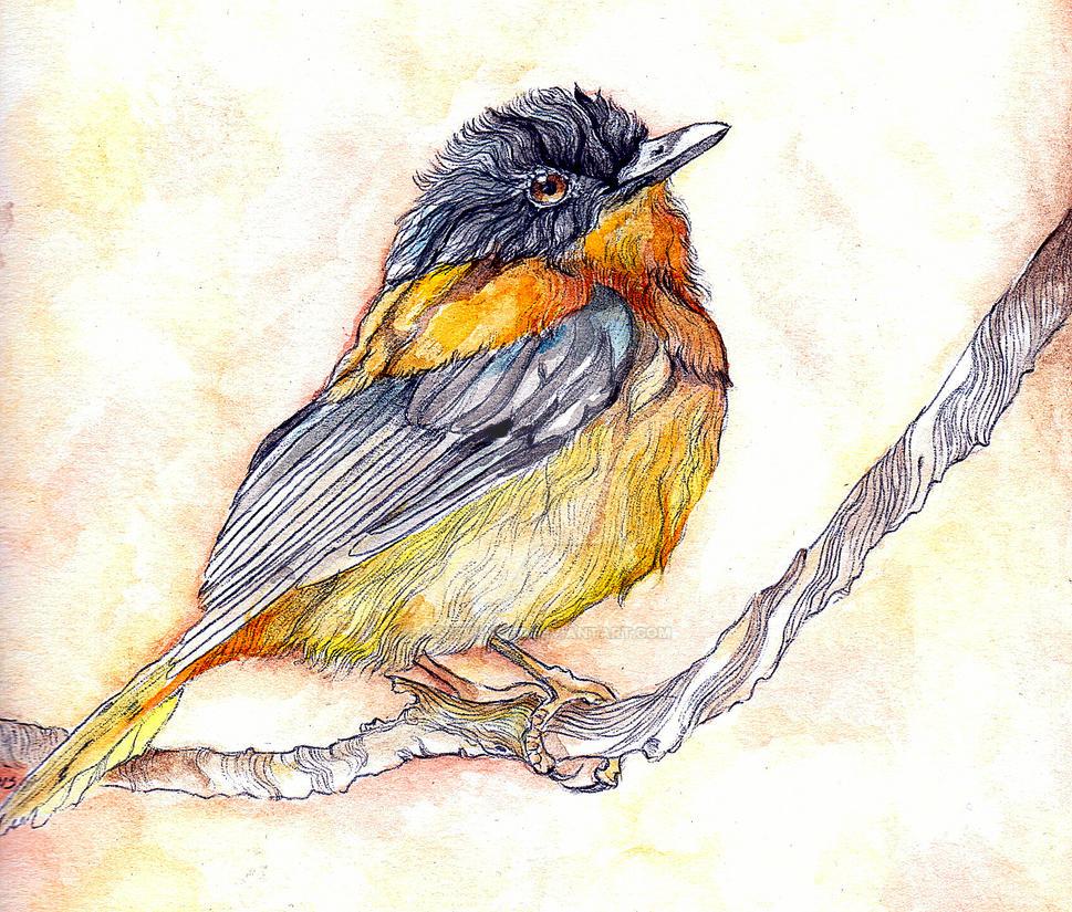 Little Bird by jessburnett