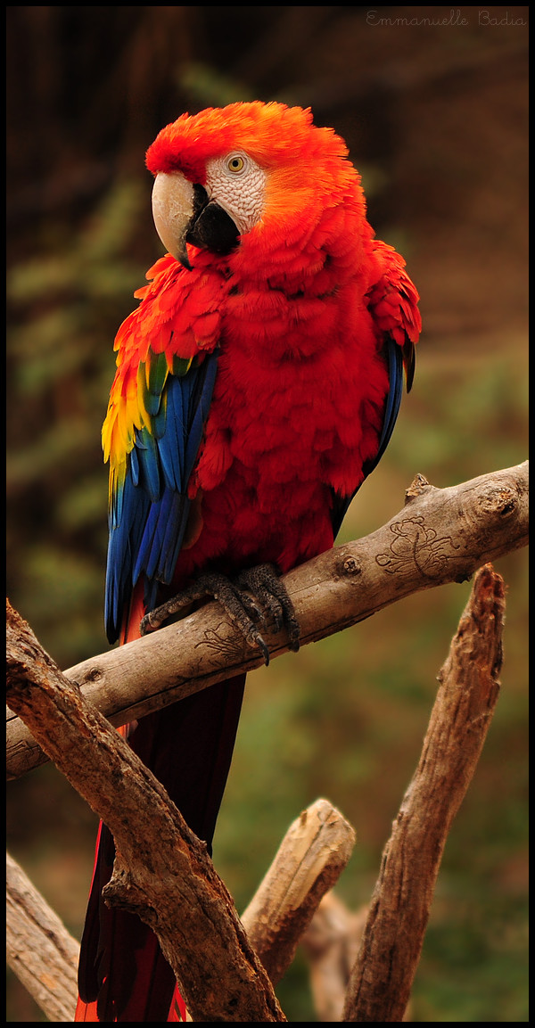 Rainbow Bird by Et-Manue-Elle
