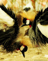Punks Birds by Et-Manue-Elle