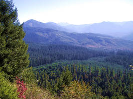 Willamette National Forest 1 by smhill