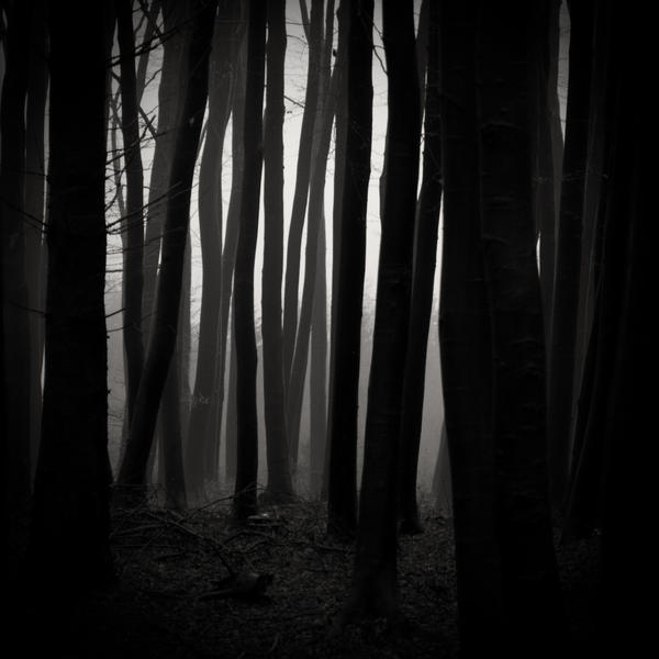-Direction to source- by Janek-Sedlar