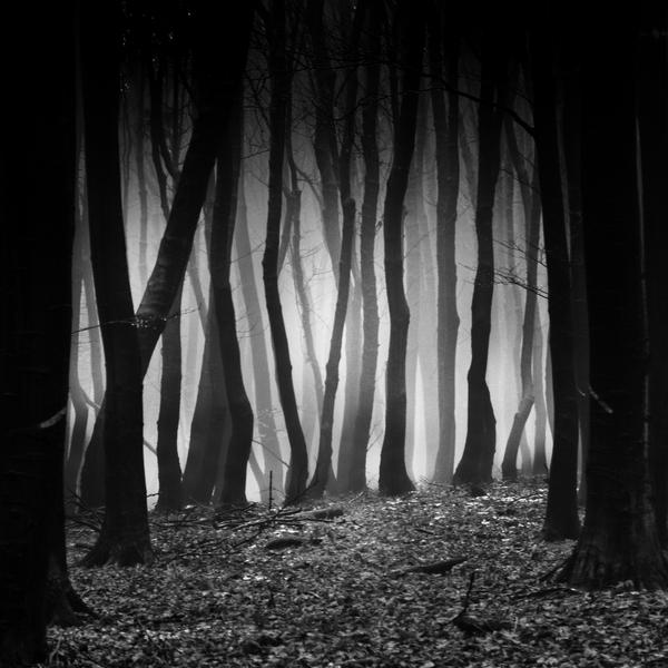 -Entrance to Dark wood- by Janek-Sedlar