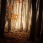-Where spirits gathered-