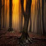 -Rembrant_s evening- by Janek-Sedlar