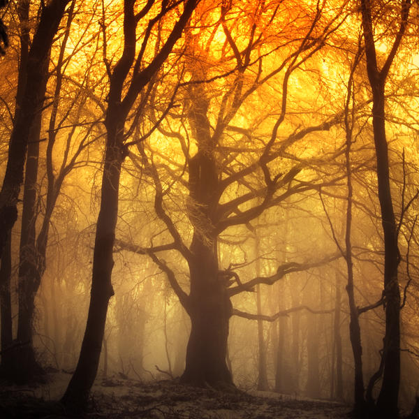 -Altar of light- by Janek-Sedlar