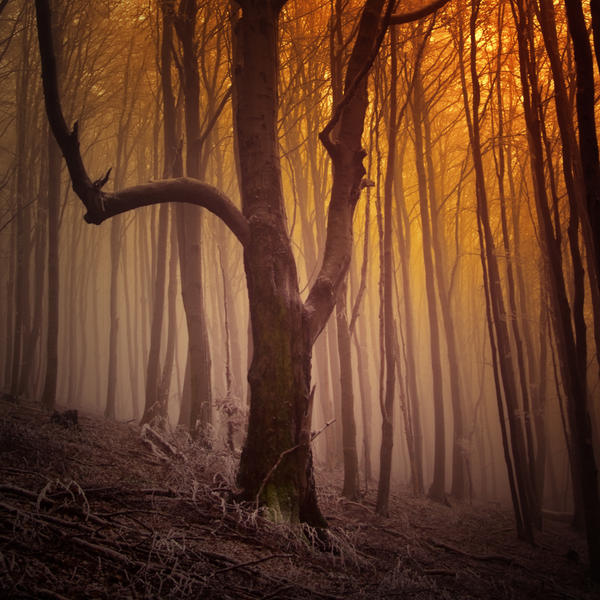 -Shepherd_s calm- by Janek-Sedlar