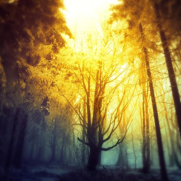 -Inside two worlds- by Janek-Sedlar