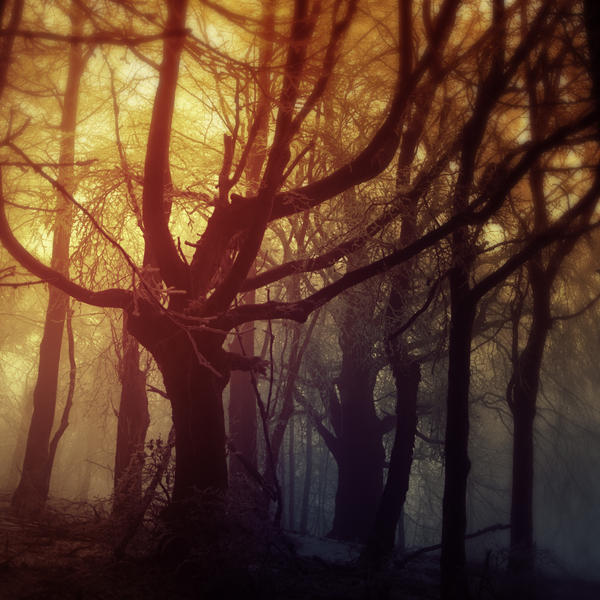 -Conjuration of the forest- by Janek-Sedlar