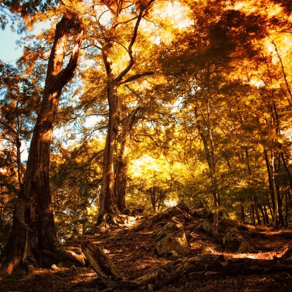 -In Flames- by Janek-Sedlar