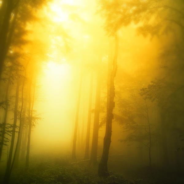 -Awakening- by Janek-Sedlar