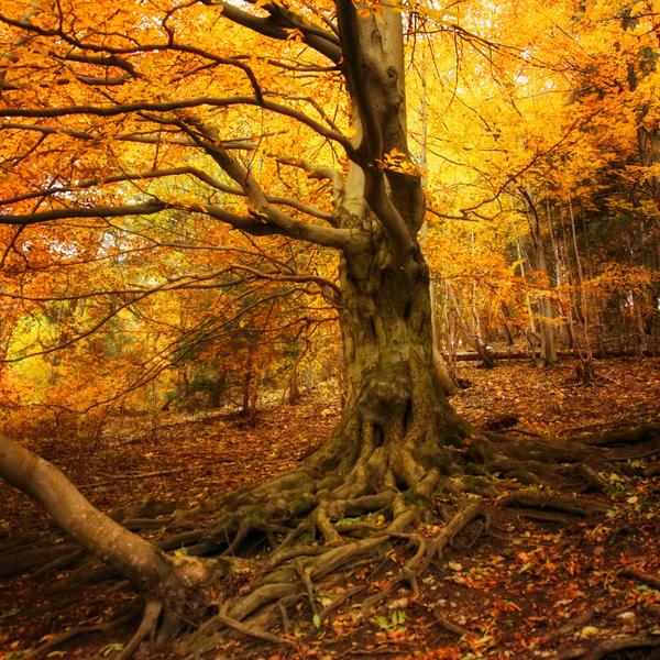 -Tree of light- by Janek-Sedlar