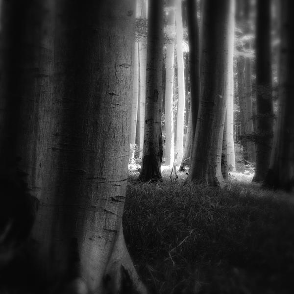 -Way to the light- by Janek-Sedlar
