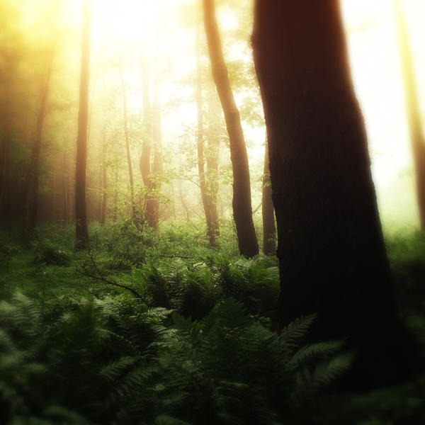 -Where fairies live- by Janek-Sedlar