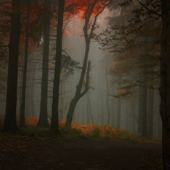 -Enlightenment of secret- by Janek-Sedlar