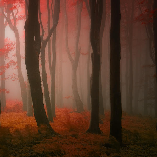 -Mahagon forest- by Janek-Sedlar