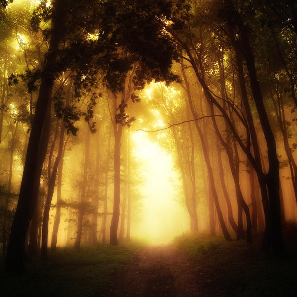 -Road to salvation- by Janek-Sedlar