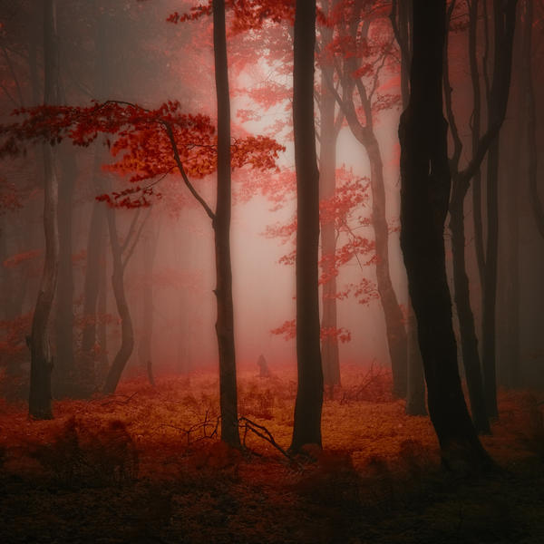 -Lost red story- by Janek-Sedlar