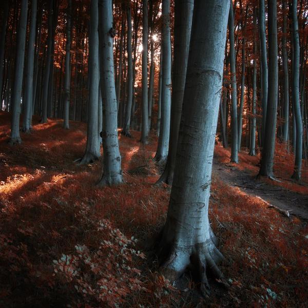 -Redwood stillness at high noon- by Janek-Sedlar