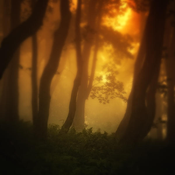 -Dance of life- by Janek-Sedlar