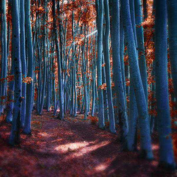 -Spirited away- by Janek-Sedlar