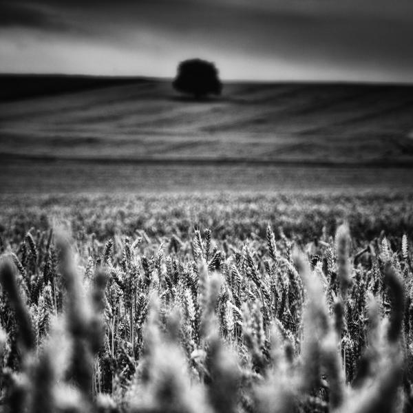 -Distant spectrator- by Janek-Sedlar