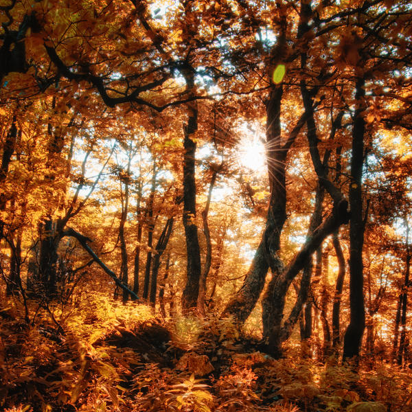 -Golden enchanting- by Janek-Sedlar