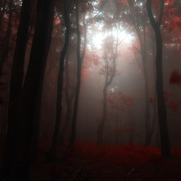 -Take me to You my lord- by Janek-Sedlar
