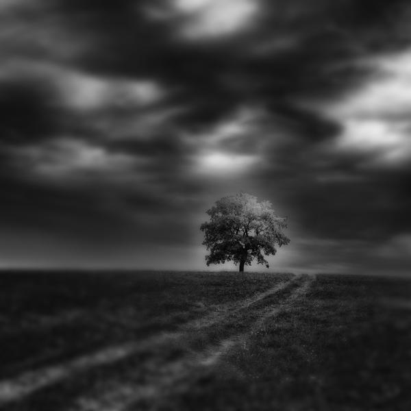 -Finding the way to a home- by Janek-Sedlar