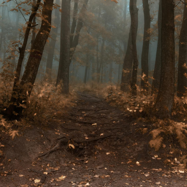 -Road to wisdom of autumn- by Janek-Sedlar