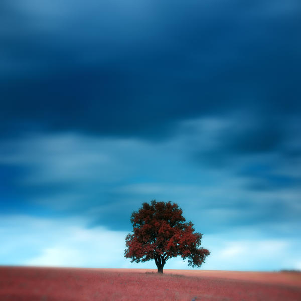 -Silent witness- by Janek-Sedlar