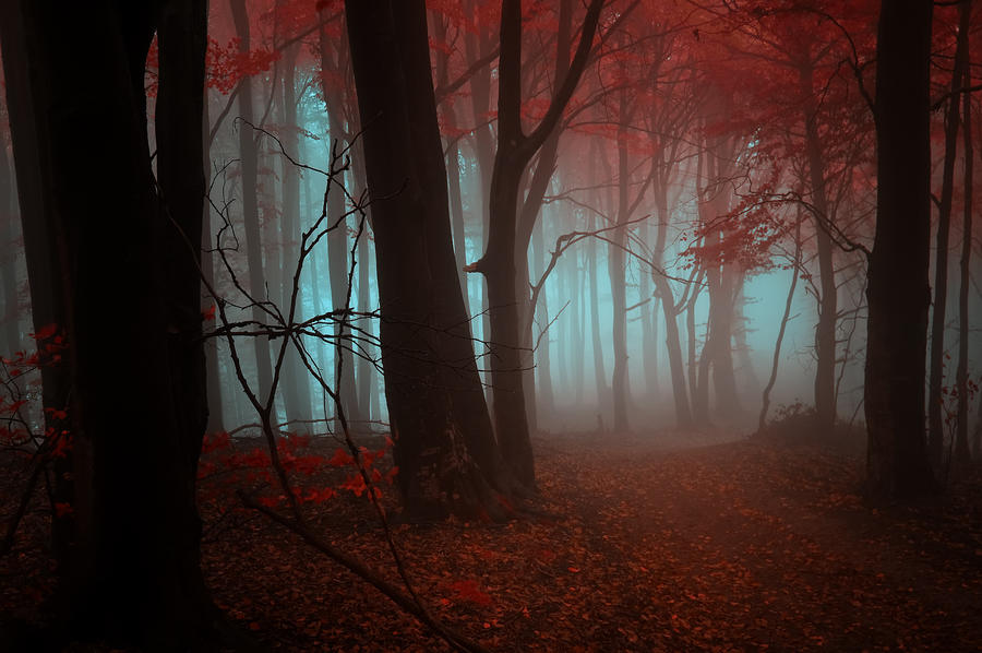 -Strange dream- by Janek-Sedlar