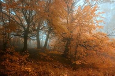 -Transcient beauty of autumn- by Janek-Sedlar