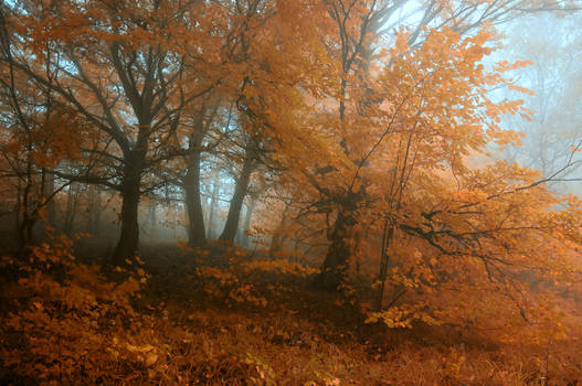 -Transcient beauty of autumn-