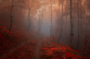 -Road into my heart- by Janek-Sedlar