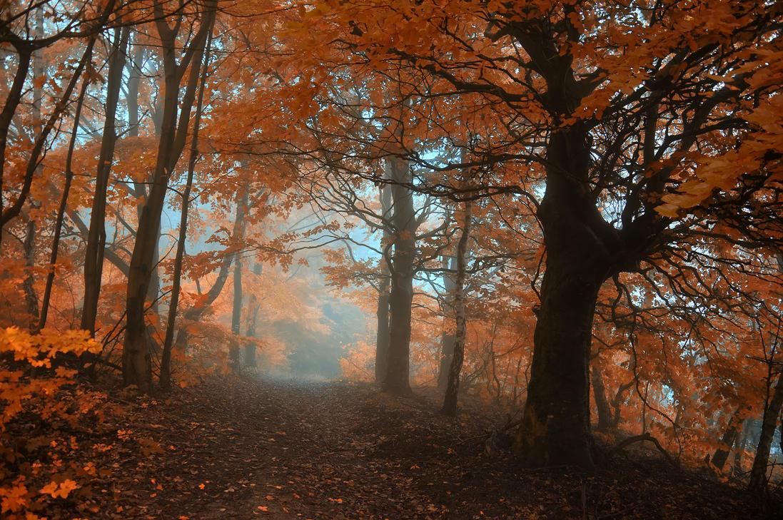 -Forgotten trail of contemplation- by Janek-Sedlar