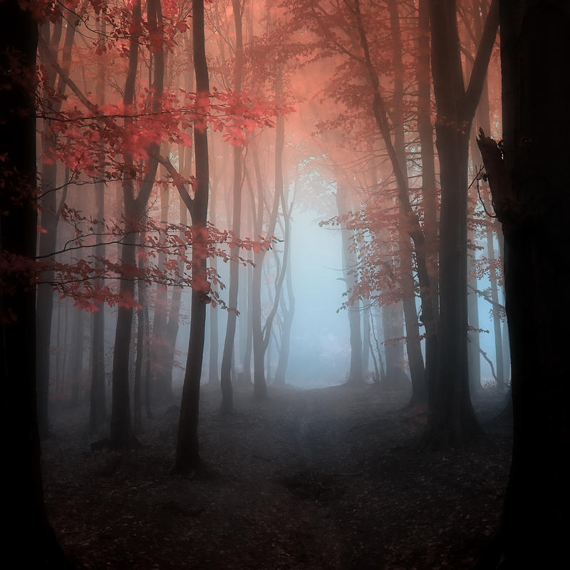 -Being in Cathedral- by Janek-Sedlar